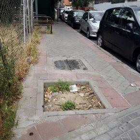 Ciudadanos Carabanchel exige al gobierno que dé una solución a los huecos vacíos donde antes había árboles