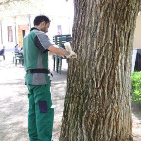 Ciudadanos Madrid Salamanca consigue aprobar que se acabe con una de las peores plagas del distrito: La Galeruca